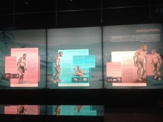 evolusi manusia prasejarah